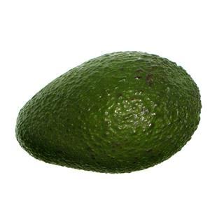 """Avocado """" Fuerte """""""