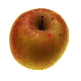 """Apfel """"Boskoop"""""""