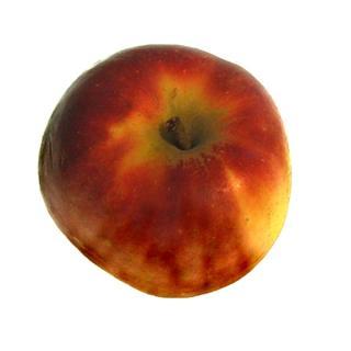"Apfel ""Elstar"""